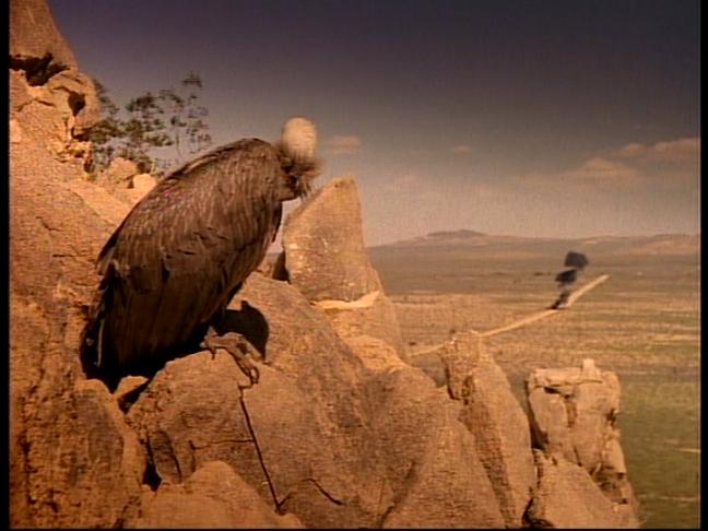 carrion death buzzard 1